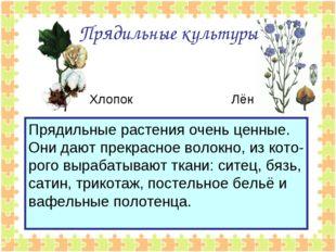 Прядильные культуры Прядильные растения очень ценные. Они дают прекрасное вол