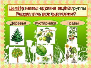 Деревья Кустарники Травы Цель: узнать, на какие ещё 2 группы можно разделить
