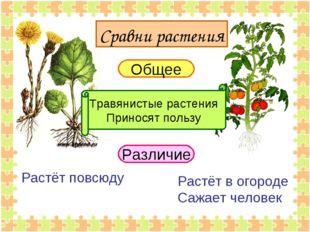 Общее Травянистые растения Приносят пользу Различие Растёт повсюду Растёт в о