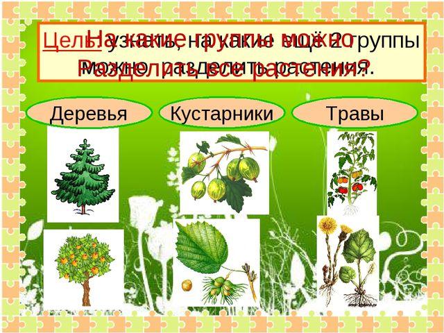Деревья Кустарники Травы Цель: узнать, на какие ещё 2 группы можно разделить...