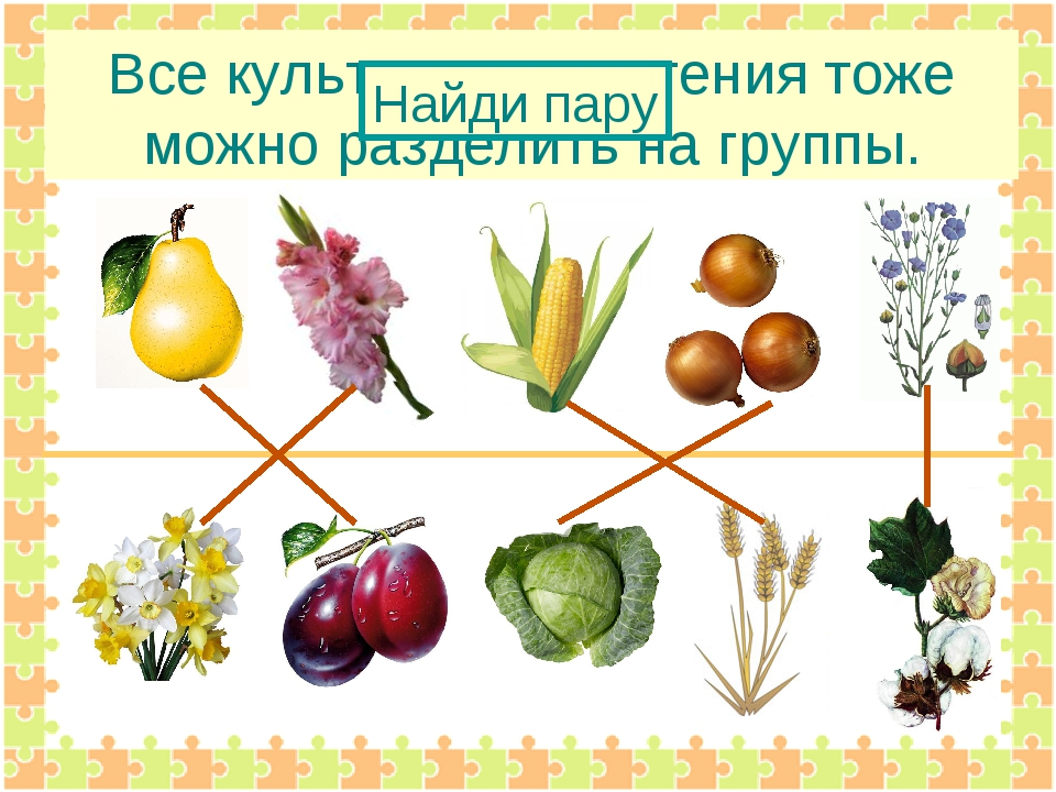 Все культурные растения тоже можно разделить на группы. Найди пару