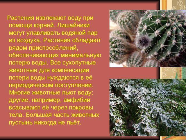 Растения извлекают воду при помощи корней. Лишайники могут улавливать водяно...
