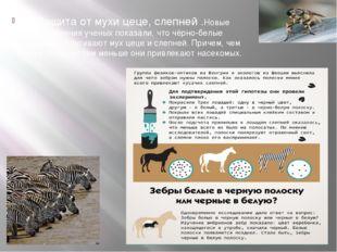 6)Защита от мухи цеце, слепней .Новые исследования ученых показали, что чёрн