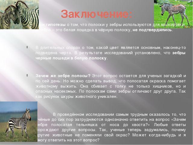 Заключение: Мои гипотезы о том, что полоски у зебры используются для маскиров...