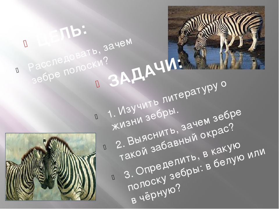 ЗАДАЧИ: ЦЕЛЬ: 1. Изучить литературу о жизни зебры. 2. Выяснить, зачем зебре...