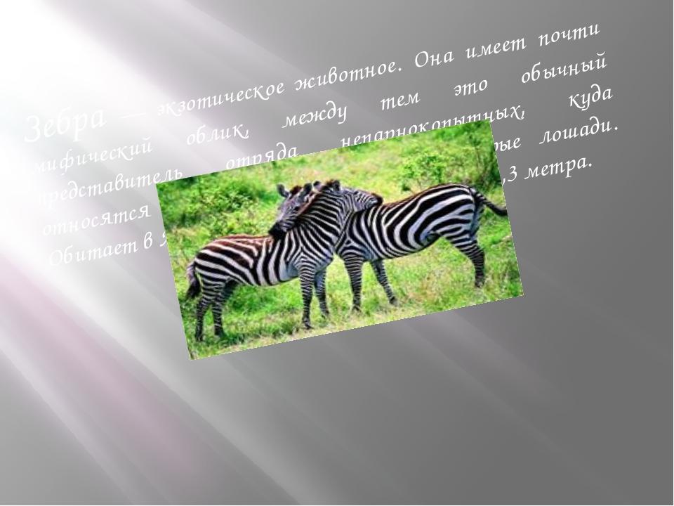 Зебра — экзотическое животное. Она имеет почти мифический облик, между тем эт...