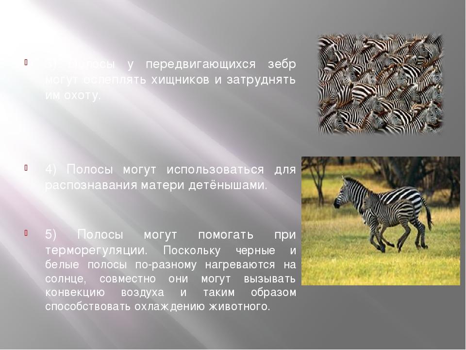 3) Полосы у передвигающихся зебр могут ослеплять хищников и затруднять им ох...
