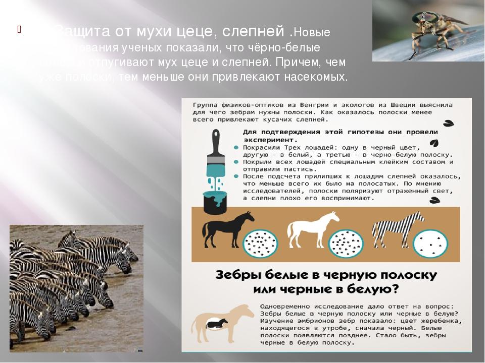 6)Защита от мухи цеце, слепней .Новые исследования ученых показали, что чёрн...