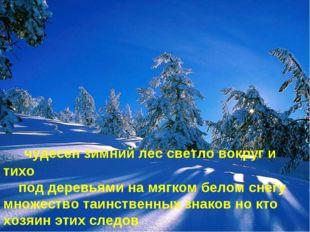 чудесен зимний лес светло вокруг и тихо под деревьями на мягком белом снегу