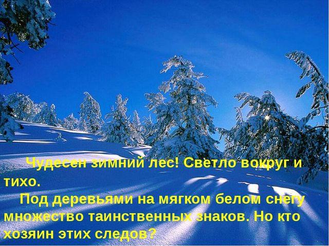 Чудесен зимний лес! Светло вокруг и тихо. Под деревьями на мягком белом снег...