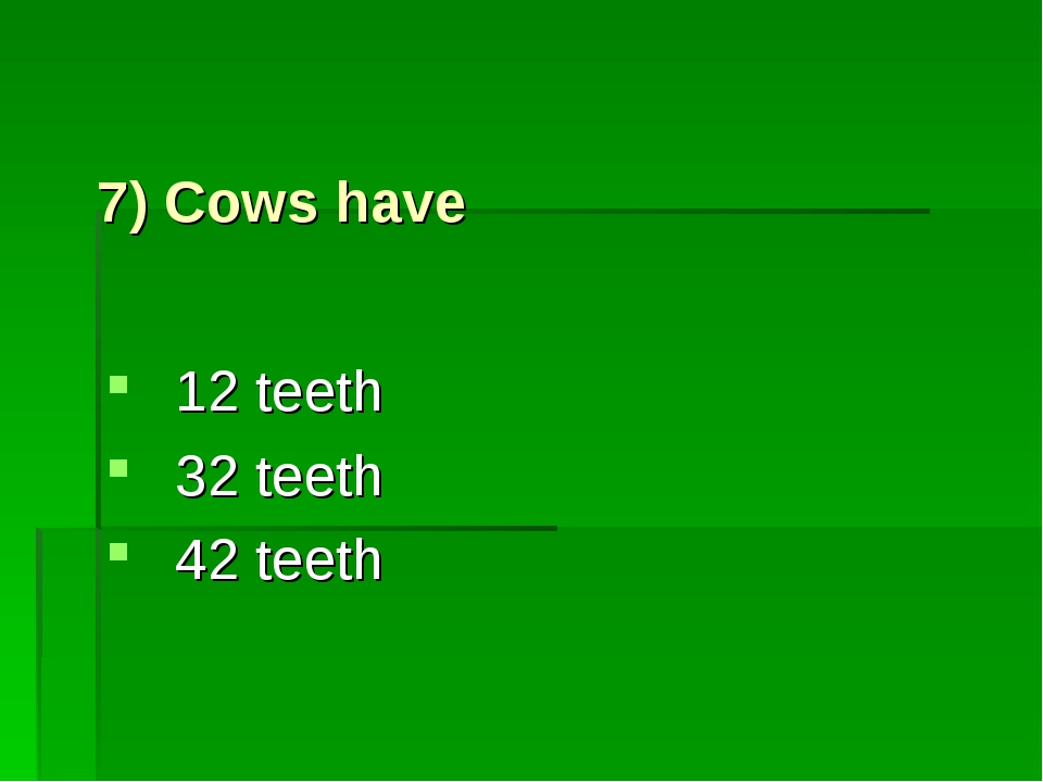 7) Cows have 12 teeth 32 teeth 42 teeth