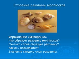 Строение раковины моллюсков Упражнение «Интервью» Что образует раковину моллю