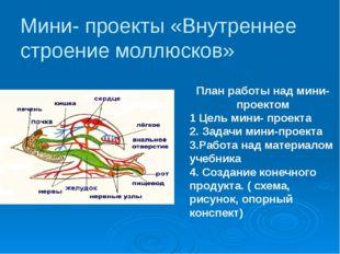 Мини- проекты «Внутреннее строение моллюсков» План работы над мини- проектом
