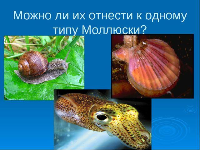 Можно ли их отнести к одному типу Моллюски?