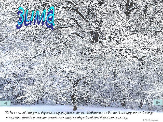 Идёт снег, лёд на реке, деревья и кустарники голые. Животных не видно. Дни ко...