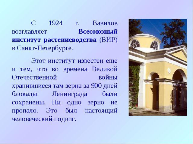 С 1924 г. Вавилов возглавляет Всесоюзный институт растениеводства (ВИР) в Са...