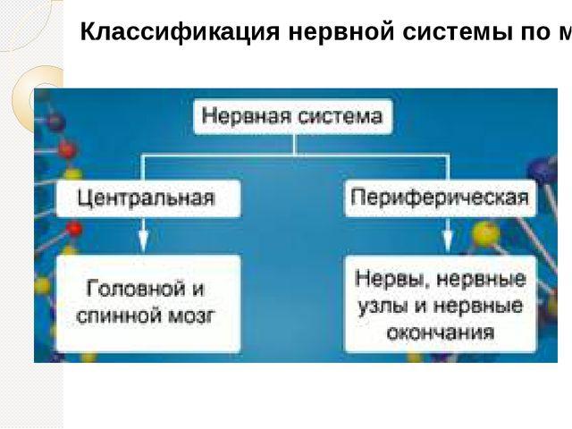 Классификация нервной системы по месторасположению