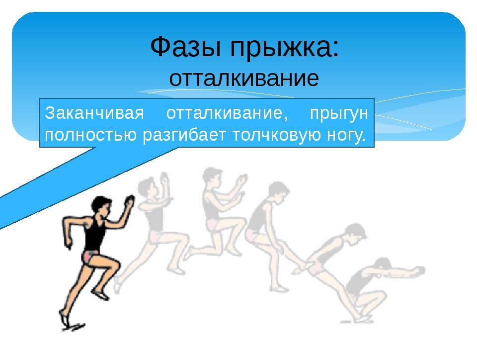 Заканчивая отталкивание, прыгун полностью разгибает толчковую ногу. Фазы прыж...
