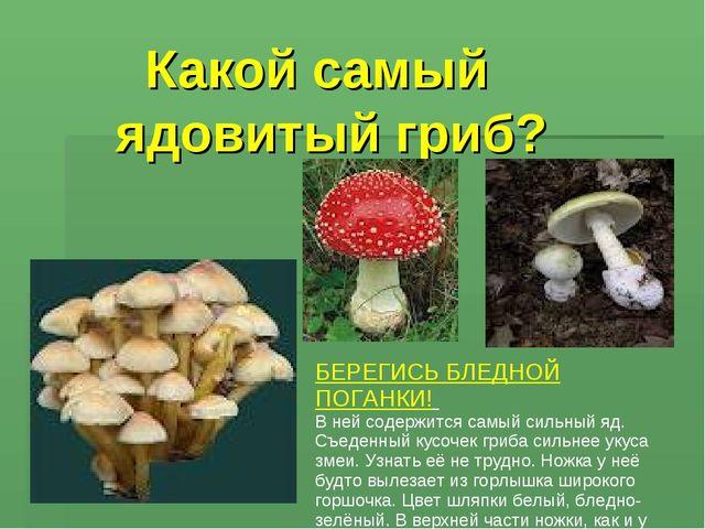 Какой самый ядовитый гриб? БЕРЕГИСЬ БЛЕДНОЙ ПОГАНКИ! В ней содержится самый...