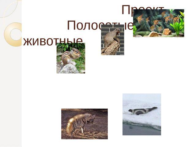 Проект             Полосатые животные