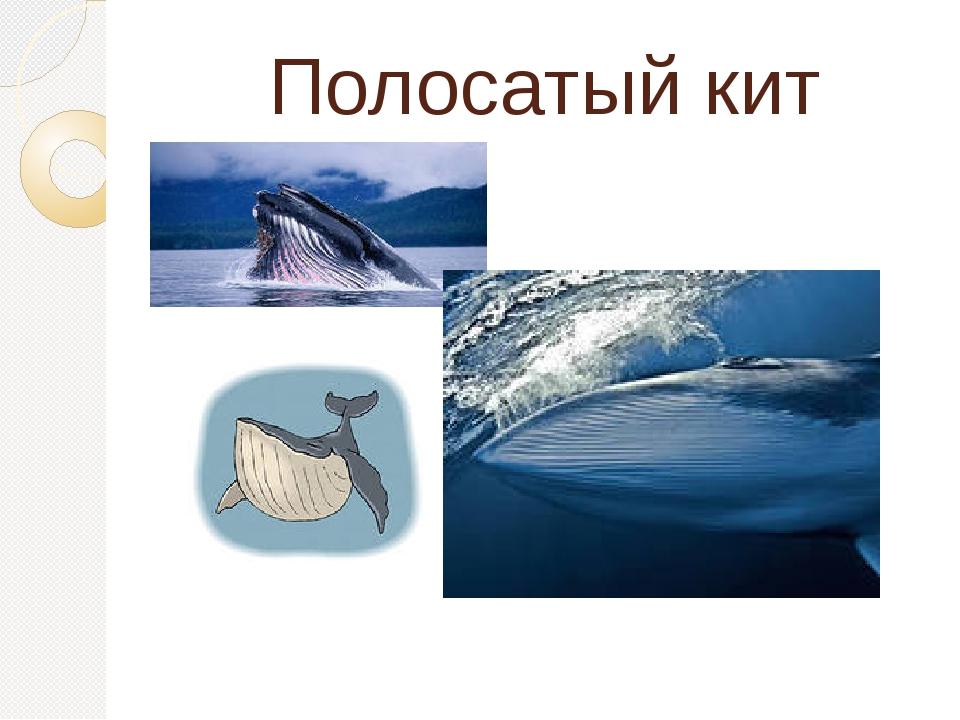 Полосатый кит
