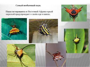 Самый необычный паук. Паук гастераканта из Восточной Африки яркой окраской пр