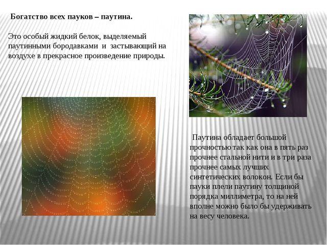 Богатство всех пауков – паутина. Это особый жидкий белок, выделяемый паутинн...