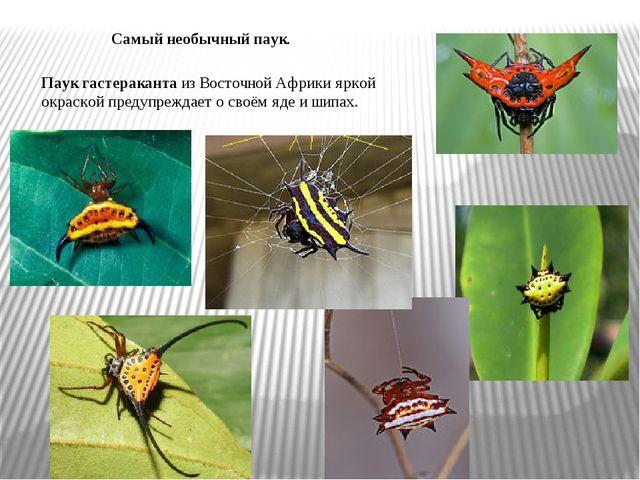 Самый необычный паук. Паук гастераканта из Восточной Африки яркой окраской пр...