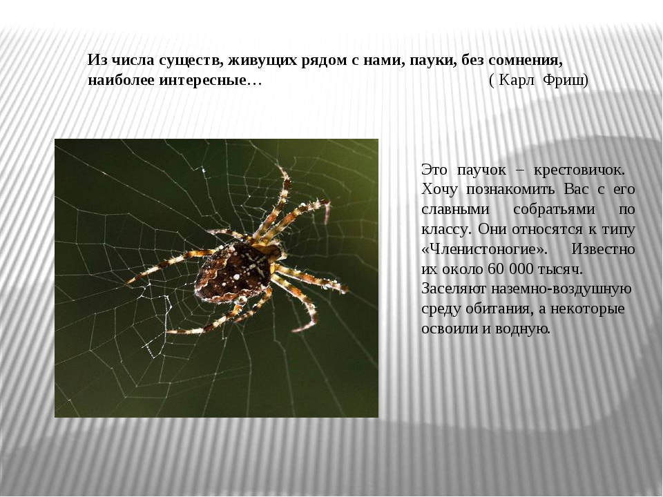 Из числа существ, живущих рядом с нами, пауки, без сомнения, наиболее интерес...