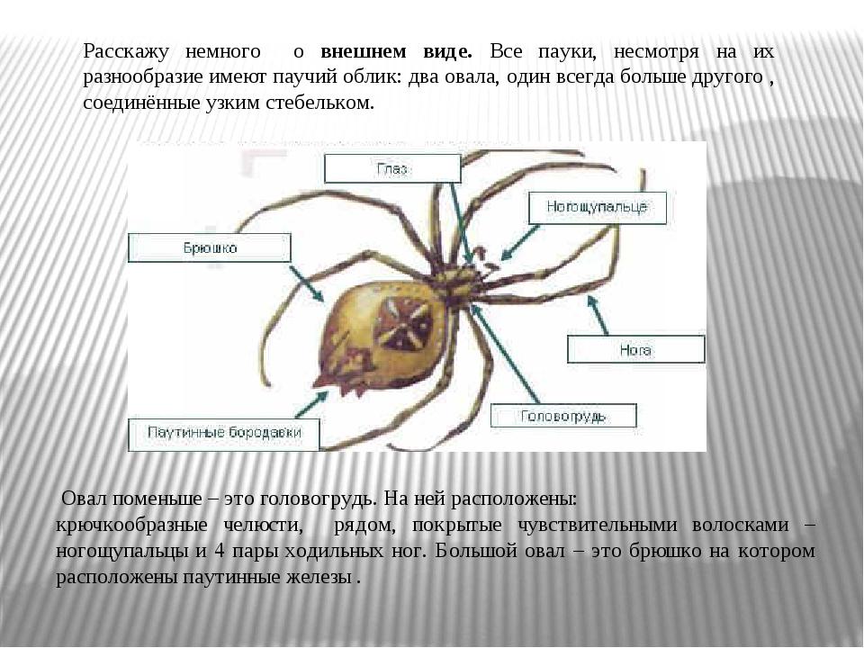 Расскажу немного о внешнем виде. Все пауки, несмотря на их разнообразие имеют...