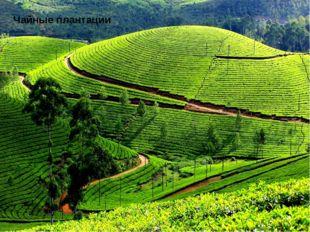 Сельское хозяйство Чайные плантации Доминирующая отрасль ,30% ВВП, 4 место в