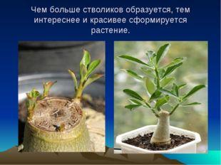 Чем больше стволиков образуется, тем интереснее и красивее сформируется расте
