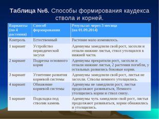 Таблица №6. Способы формирования каудекса ствола и корней. Варианты (по 4 рас