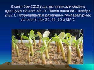 В сентябре 2012 года мы выписали семена адениума тучного 40 шт. Посев провел