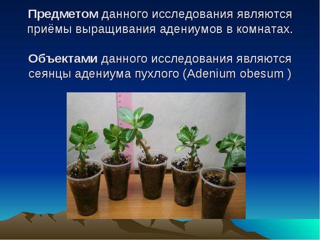 Предметом данного исследования являются приёмы выращивания адениумов в комна...