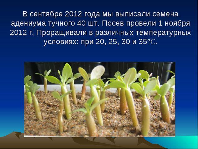 В сентябре 2012 года мы выписали семена адениума тучного 40 шт. Посев провел...