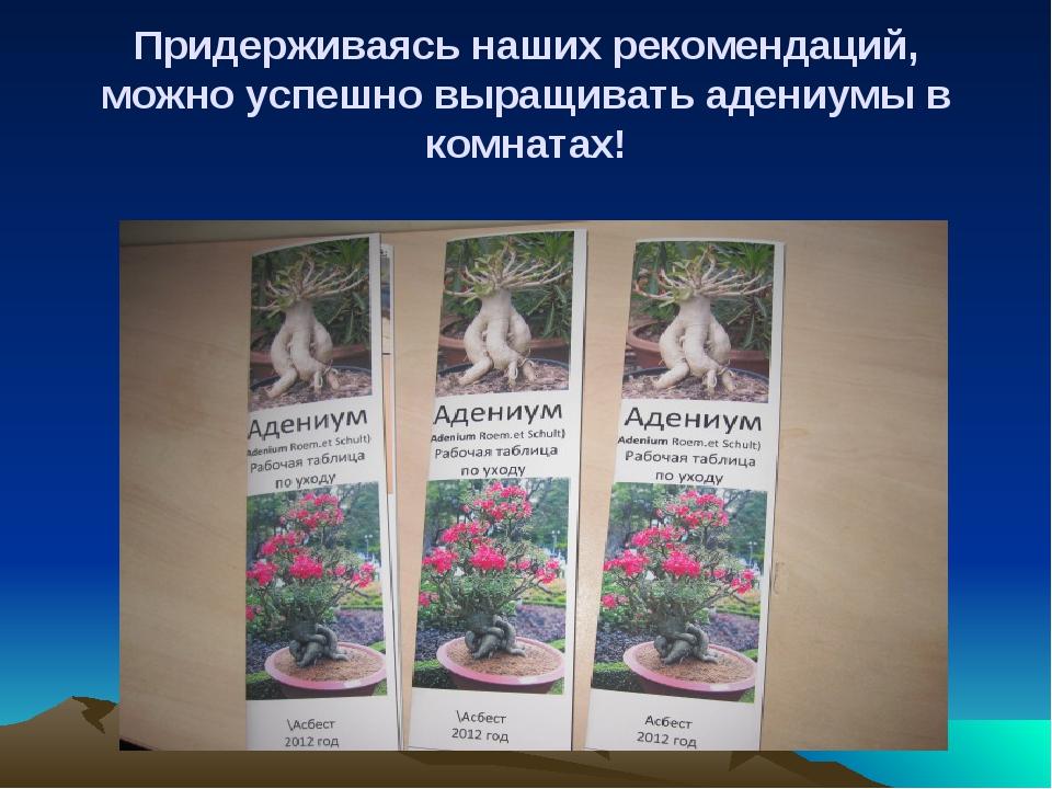 Придерживаясь наших рекомендаций, можно успешно выращивать адениумы в комнатах!