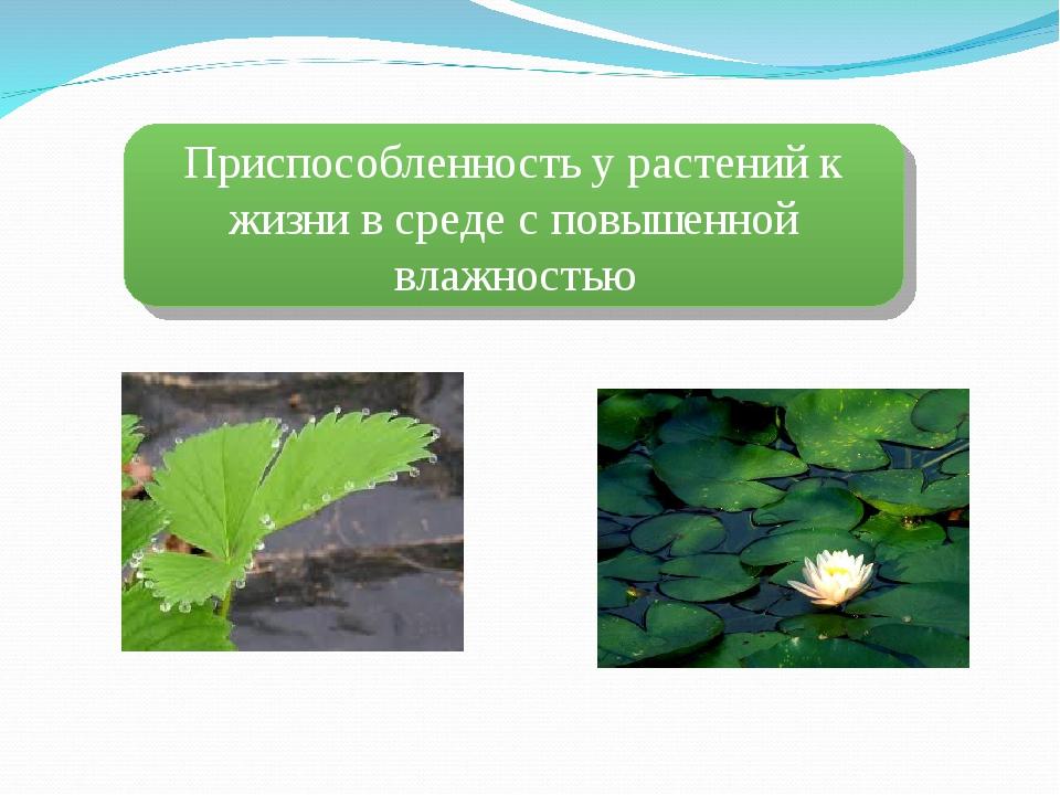 Приспособленность у растений к жизни в среде с повышенной влажностью
