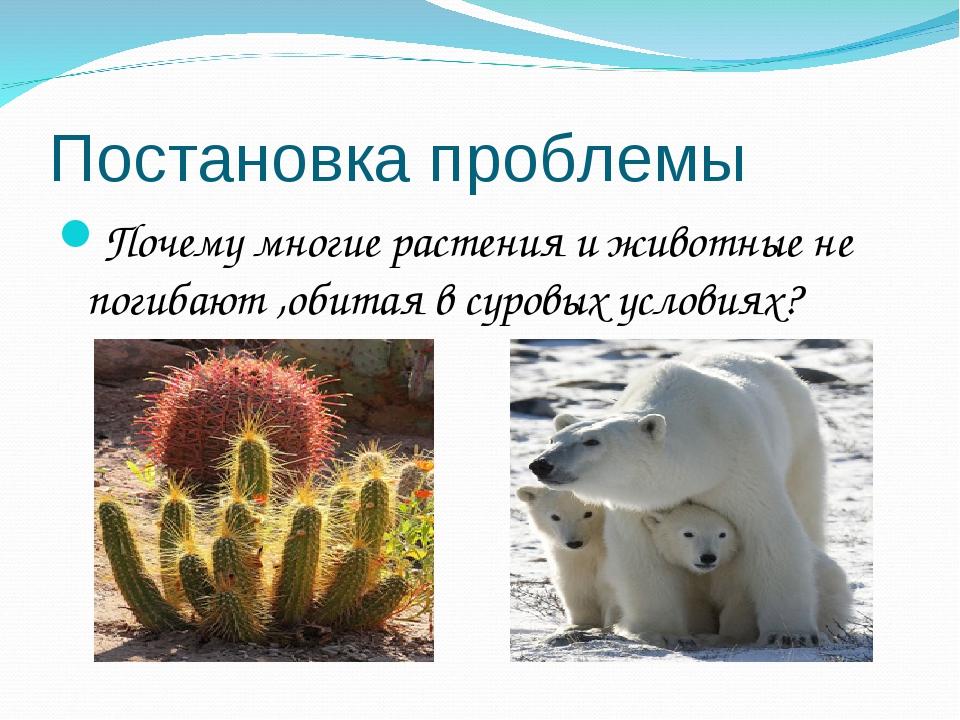Постановка проблемы Почему многие растения и животные не погибают ,обитая в с...