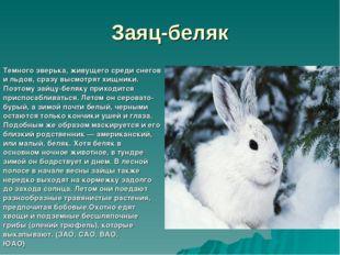 Заяц-беляк Темного зверька, живущего среди снегов и льдов, сразу высмотрят хи