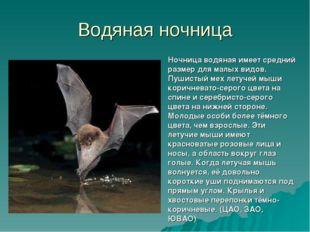 Водяная ночница Ночница водяная имеет средний размер для малых видов. Пушисты