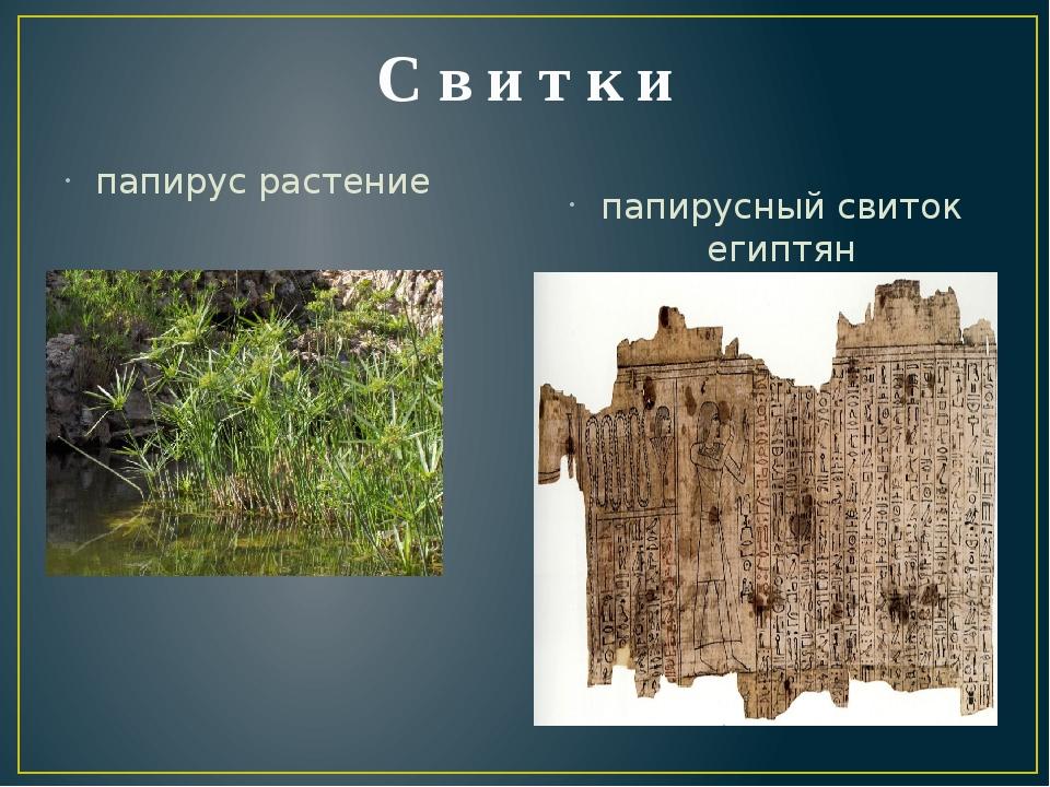 С в и т к и папирус растение папирусный свиток египтян
