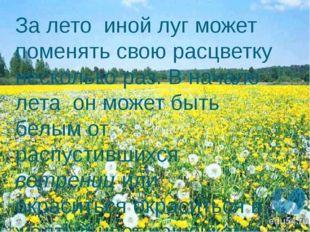 За лето иной луг может поменять свою расцветку несколько раз. В начале лета о