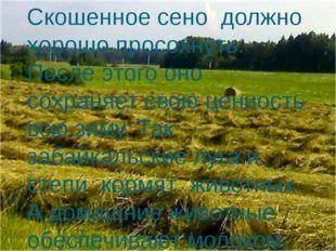 Скошенное сено должно хорошо просохнуть. После этого оно сохраняет свою ценно