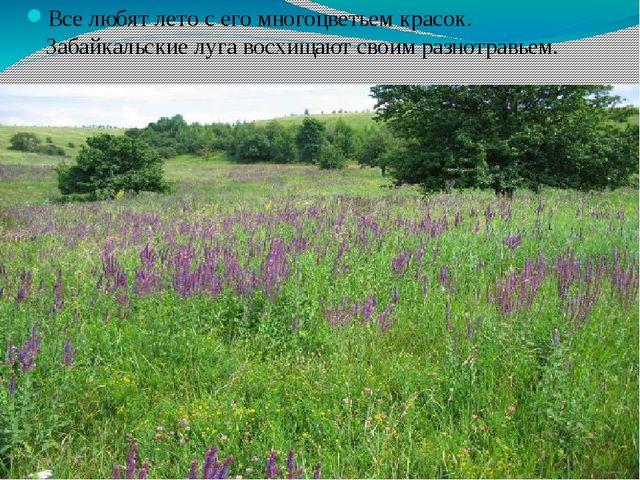 Все любят лето с его многоцветьем красок. Забайкальские луга восхищают своим...