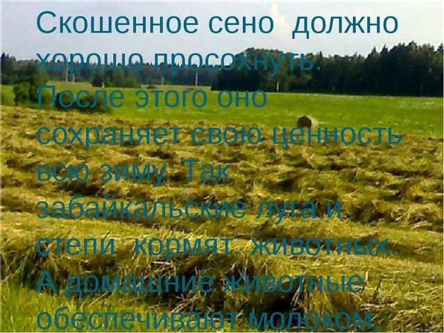 Скошенное сено должно хорошо просохнуть. После этого оно сохраняет свою ценно...