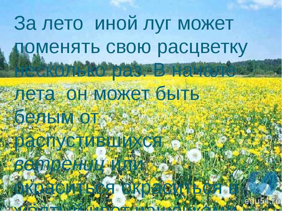За лето иной луг может поменять свою расцветку несколько раз. В начале лета о...