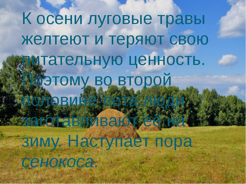 К осени луговые травы желтеют и теряют свою питательную ценность. Поэтому во...