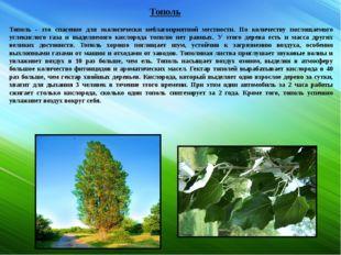 Тополь Тополь - это спасение для экологически неблагоприятной местности. По к