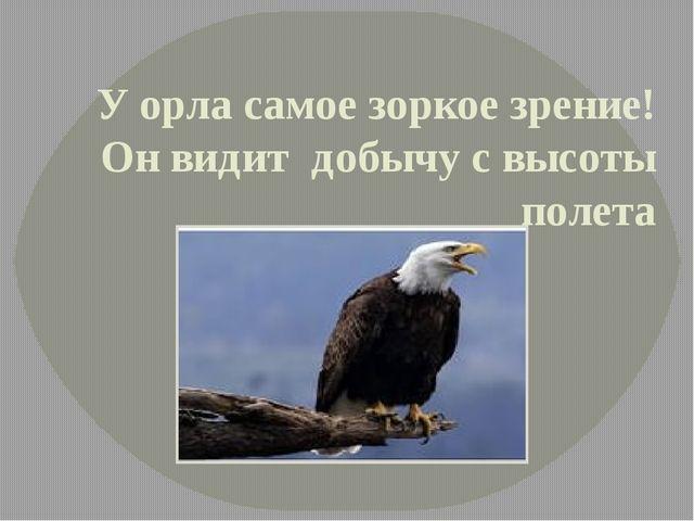 У орла самое зоркое зрение! Он видит добычу с высоты полета